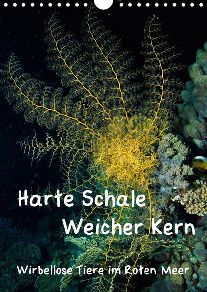 Harte Schale - weicher Kern, wirbellose Tiere im Roten Meer (Wandkalender 2017 DIN A4 hoch) - Coverbild