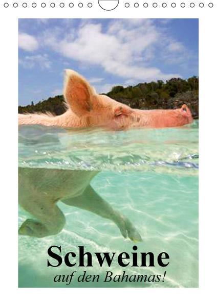 Schweine auf den Bahamas! (Wandkalender 2017 DIN A4 hoch) - Coverbild