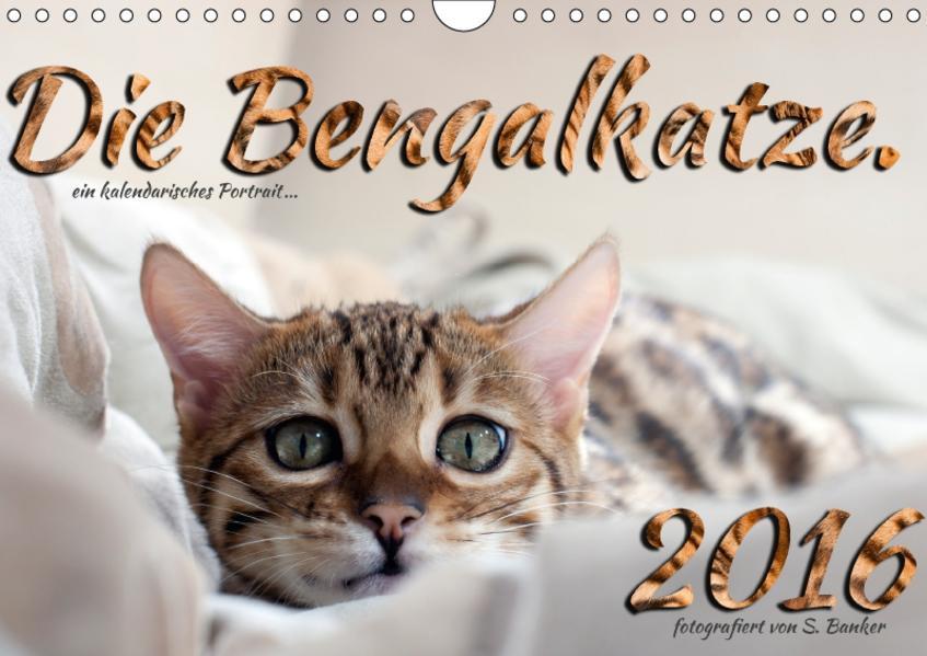 Die Bengalkatze. Ein fotografisches Portrait (Wandkalender 2017 DIN A4 quer) - Coverbild