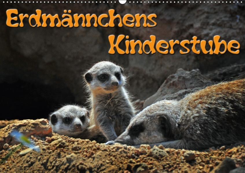 Erdmännchens Kinderstube (Wandkalender 2017 DIN A2 quer) - Coverbild