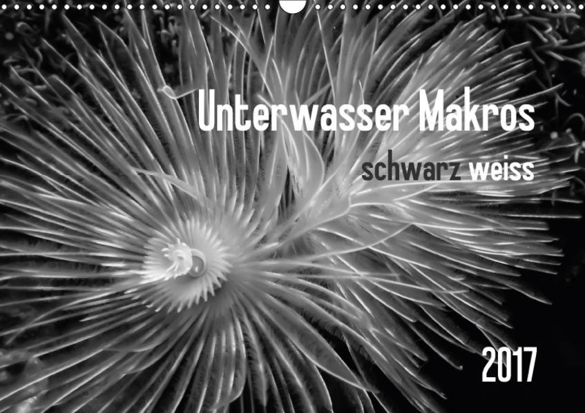Unterwasser Makros - schwarz weiss 2017 (Wandkalender 2017 DIN A3 quer) - Coverbild