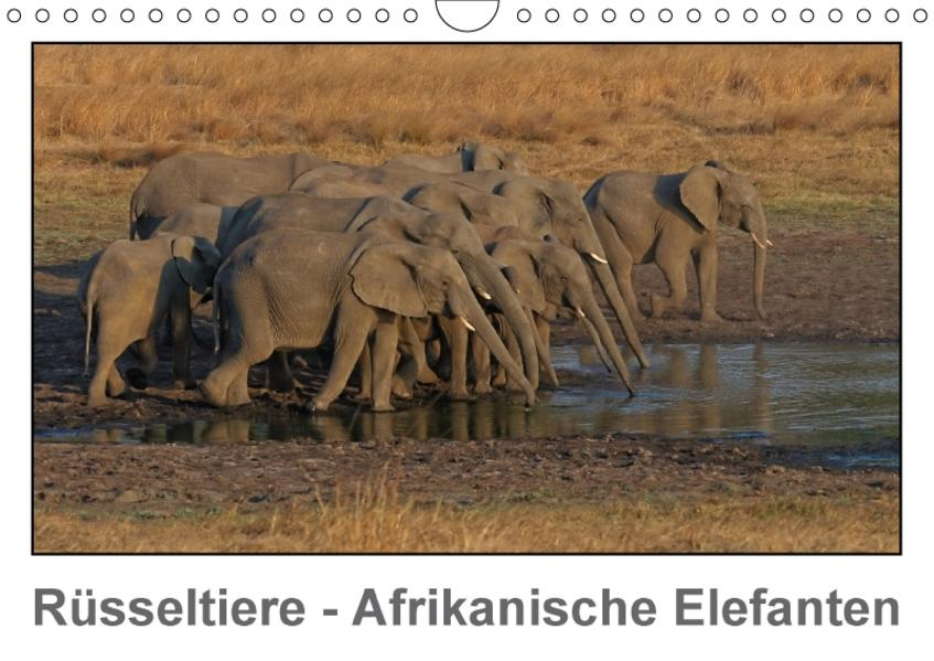 Rüsseltiere - Afrikanische Elefanten (Wandkalender 2017 DIN A4 quer) - Coverbild