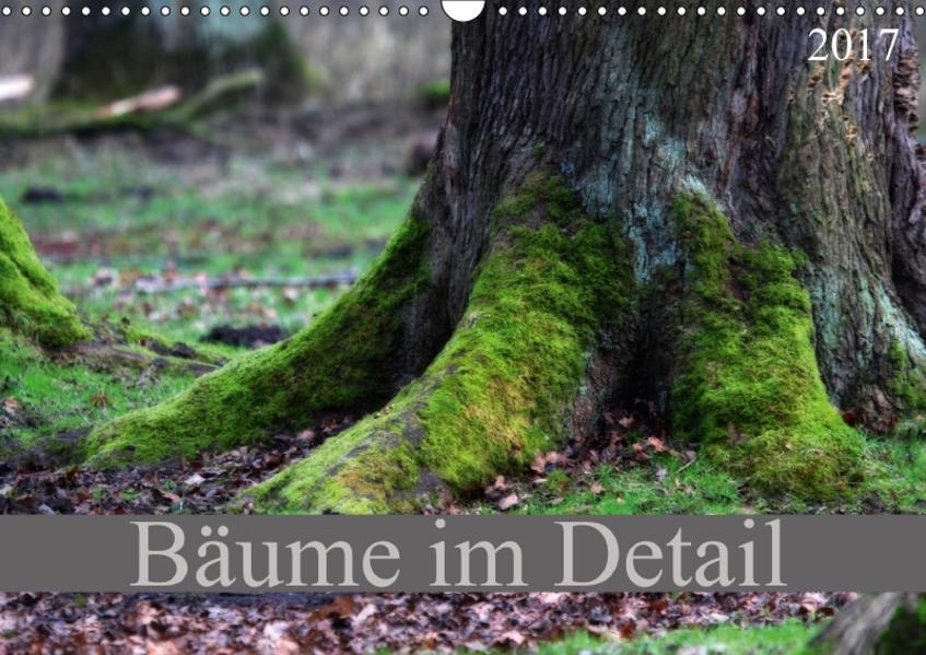 Bäume im Detail (Wandkalender 2017 DIN A3 quer) - Coverbild