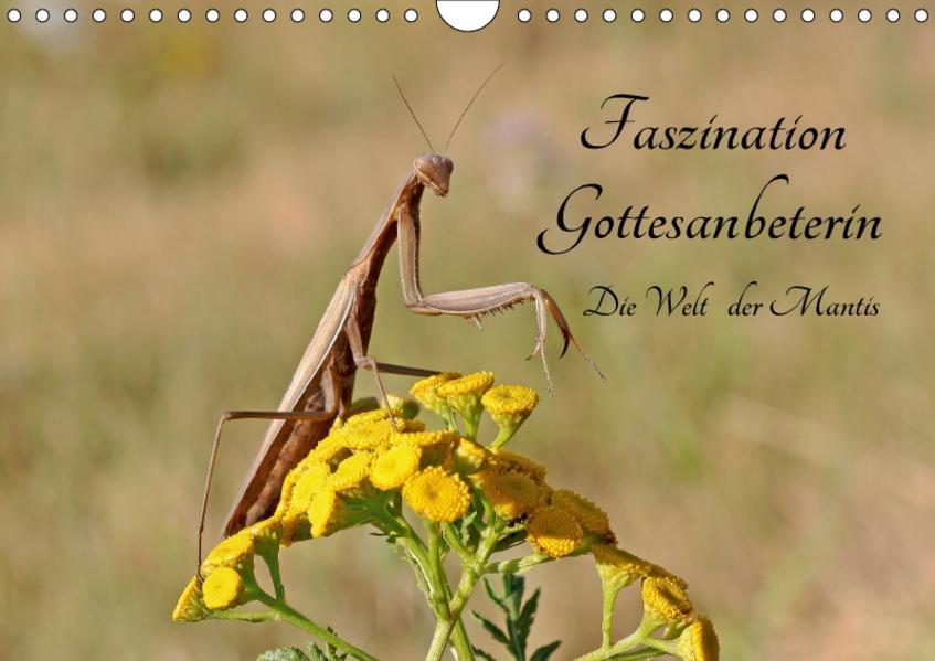 Faszination Gottesanbeterin - Die Welt der Mantis (Wandkalender 2017 DIN A4 quer) - Coverbild