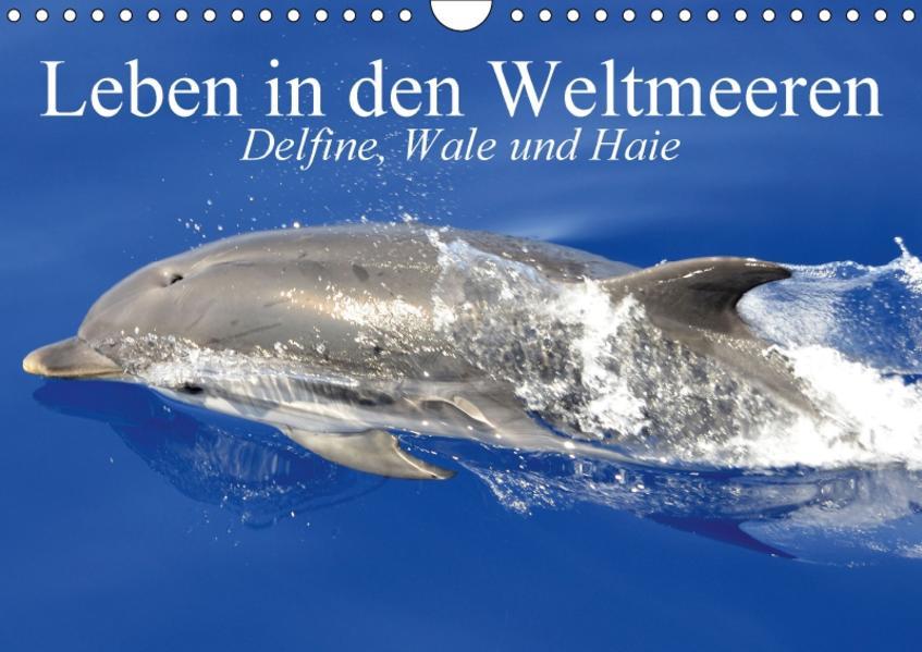 Leben in den Weltmeeren. Delfine, Wale und Haie (Wandkalender 2017 DIN A4 quer) - Coverbild