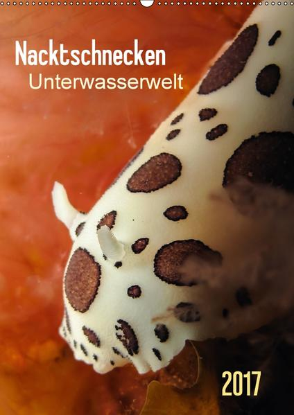 Nacktschnecken - Unterwasserwelt 2017 (Wandkalender 2017 DIN A2 hoch) - Coverbild