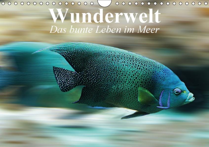Wunderwelt. Das bunte Leben im Meer (Wandkalender 2017 DIN A4 quer) - Coverbild