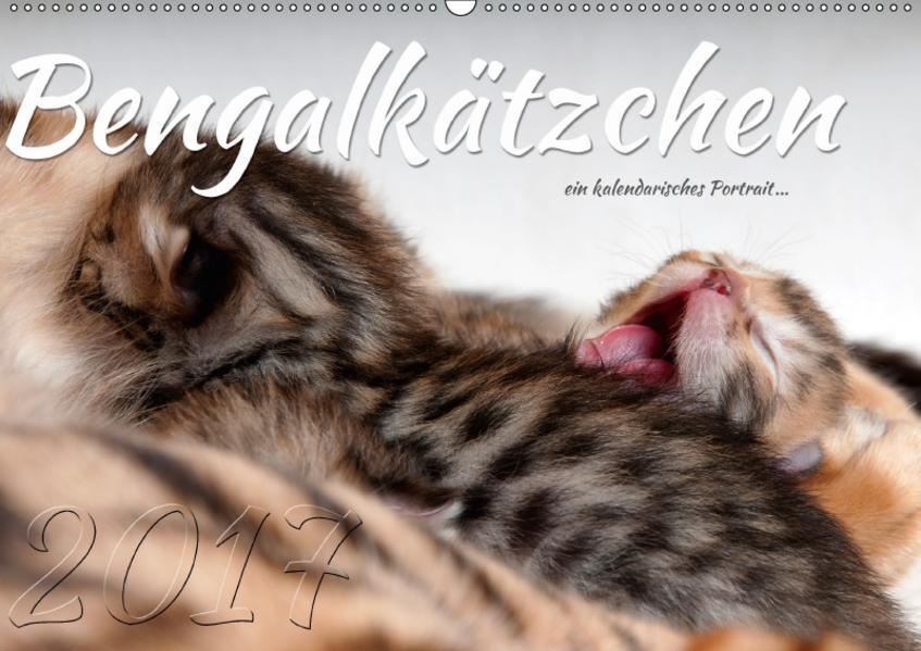 Bengalkätzchen – Ein kalendarisches Portrait (Wandkalender 2017 DIN A2 quer) - Coverbild