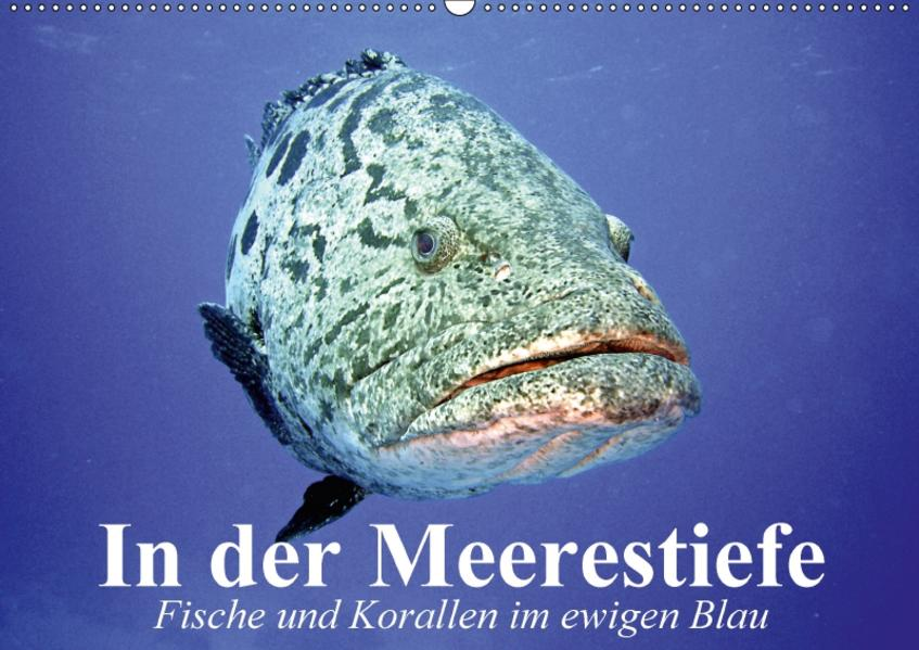 In der Meerestiefe. Fische und Korallen im ewigen Blau (Wandkalender 2017 DIN A2 quer) - Coverbild