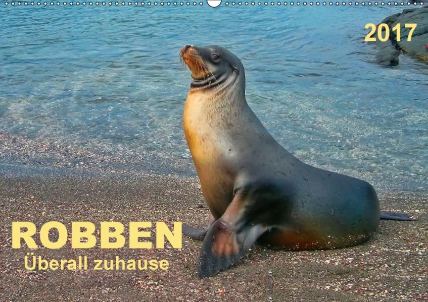 Robben - überall zuhause (Wandkalender 2017 DIN A2 quer) - Coverbild