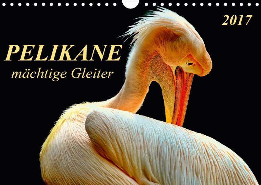 Pelikane - mächtige Gleiter (Wandkalender 2017 DIN A4 quer) - Coverbild