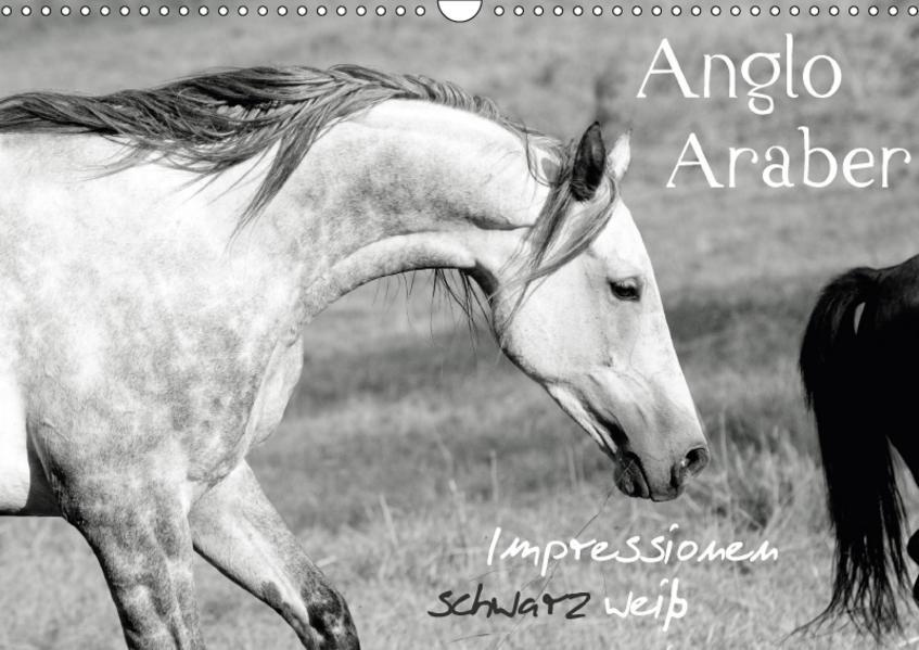 Anglo Araber Impressionen schwarz weiß (Wandkalender 2017 DIN A3 quer) - Coverbild