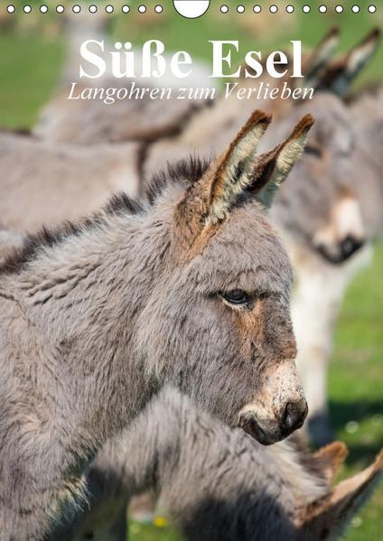 Süße Esel. Langohren zum Verlieben (Wandkalender 2017 DIN A4 hoch) - Coverbild