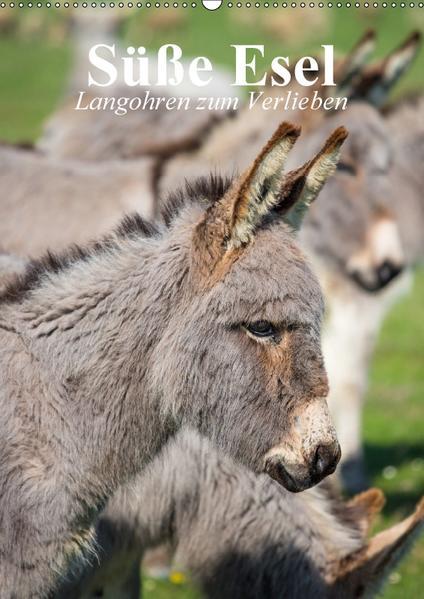 Süße Esel. Langohren zum Verlieben (Wandkalender 2017 DIN A2 hoch) - Coverbild