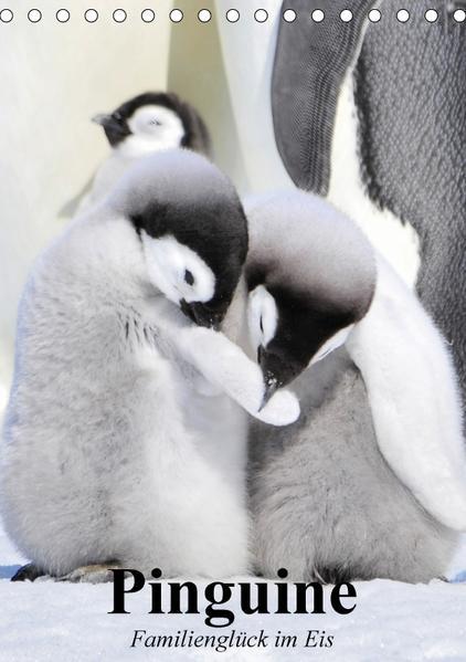 Pinguine. Familienglück im Eis (Tischkalender 2017 DIN A5 hoch) - Coverbild