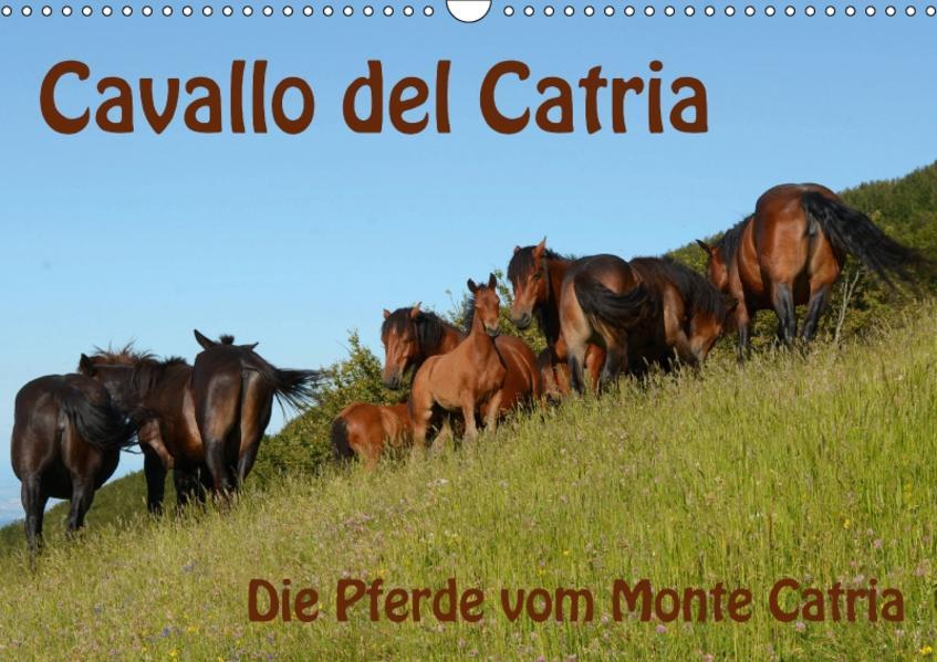 Cavallo del Catria - Die Pferde vom Monte Catria (Wandkalender 2017 DIN A3 quer) - Coverbild