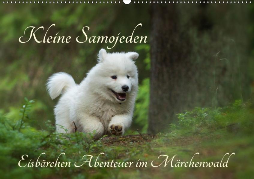 Kleine Samojeden - Eisbärchen Abenteuer im Märchenwald (Wandkalender 2017 DIN A2 quer) - Coverbild