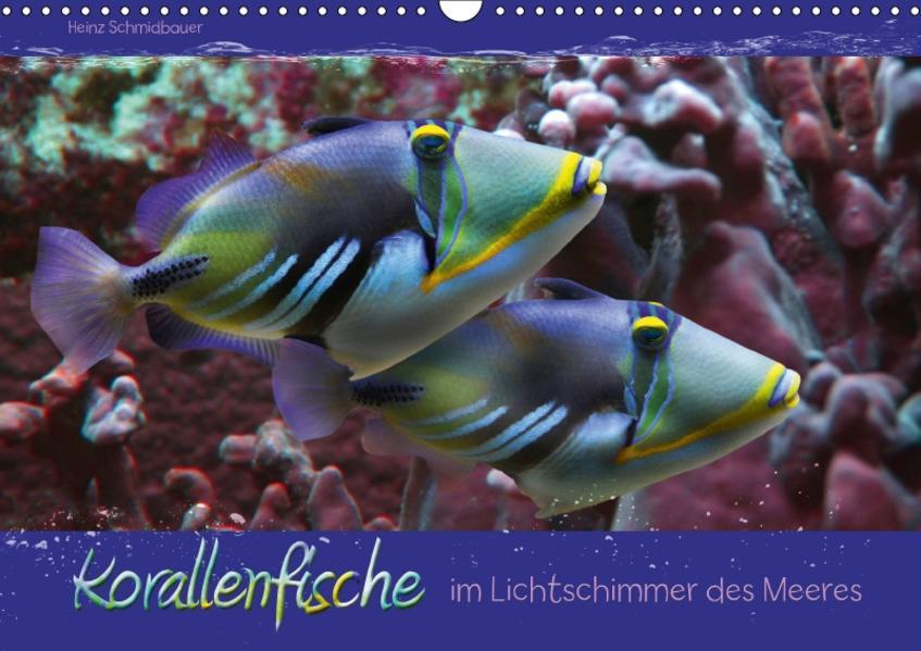 Korallenfische im Lichtschimmer des Meeres (Wandkalender 2017 DIN A3 quer) - Coverbild