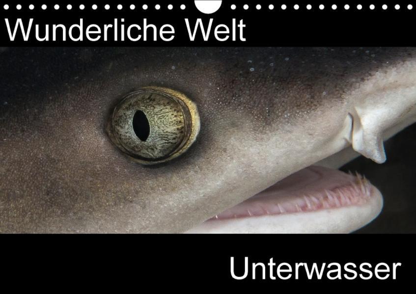 Wunderliche Welt Unterwasser (Wandkalender 2017 DIN A4 quer) - Coverbild