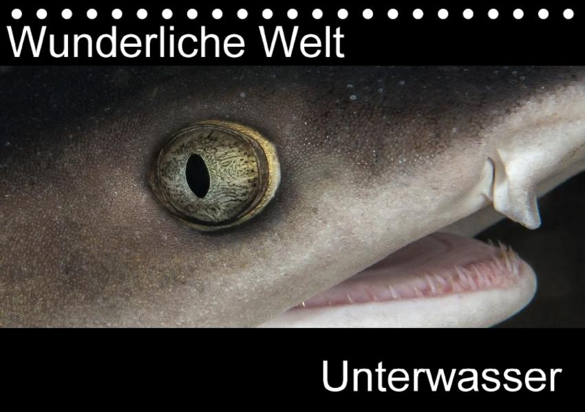 Wunderliche Welt Unterwasser (Tischkalender 2017 DIN A5 quer) - Coverbild
