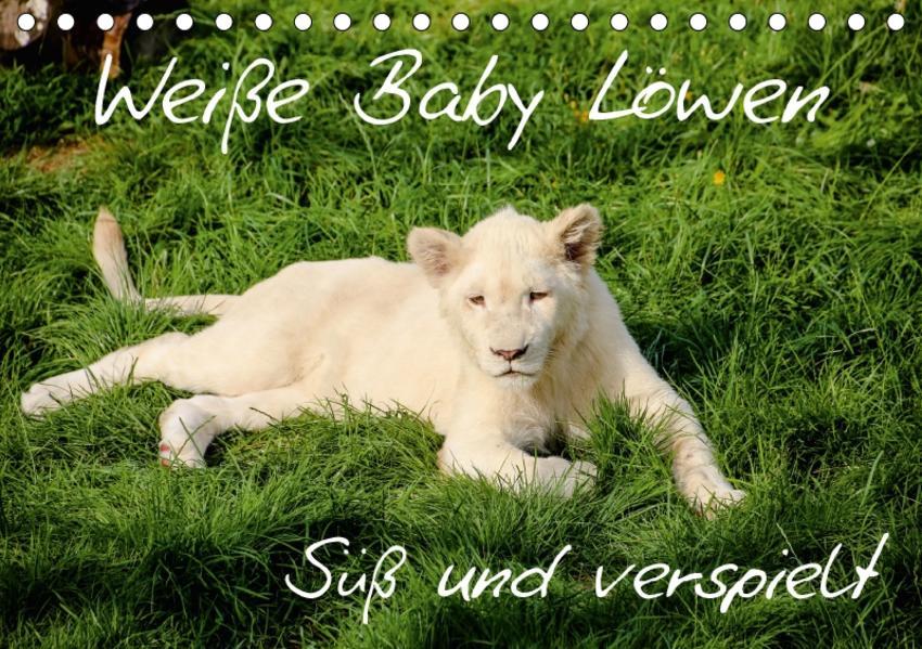 Weiße Baby Löwen - Süß und verspielt (Tischkalender 2017 DIN A5 quer) - Coverbild