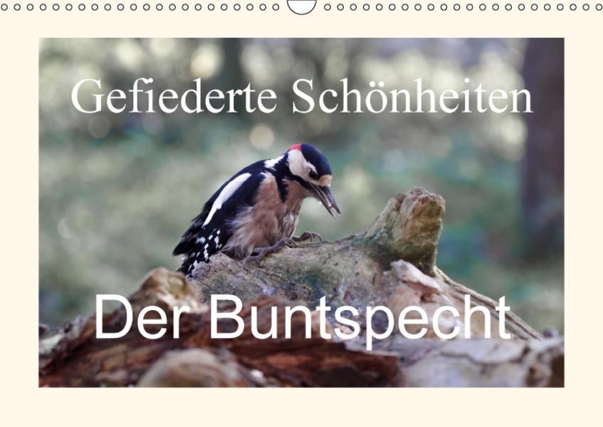 Gefiederte Schönheiten - Der Buntspecht (Wandkalender 2017 DIN A3 quer) - Coverbild