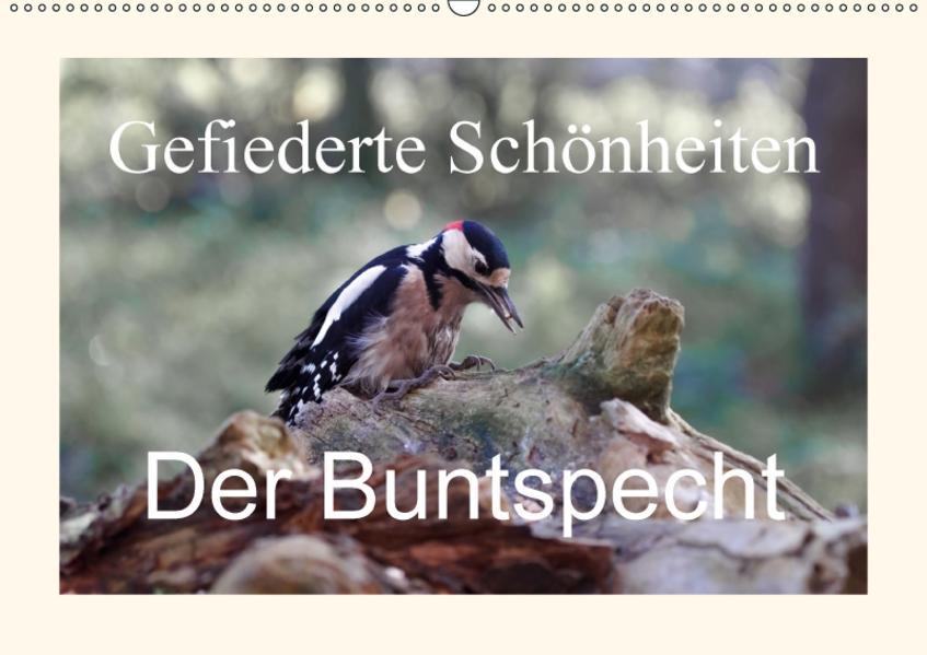 Gefiederte Schönheiten - Der Buntspecht (Wandkalender 2017 DIN A2 quer) - Coverbild