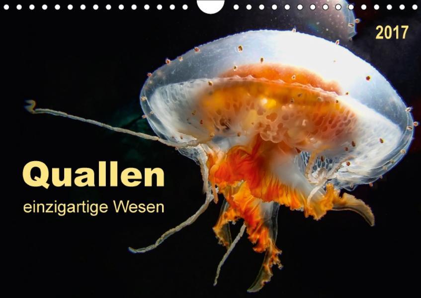 Quallen - einzigartige Wesen (Wandkalender 2017 DIN A4 quer) - Coverbild