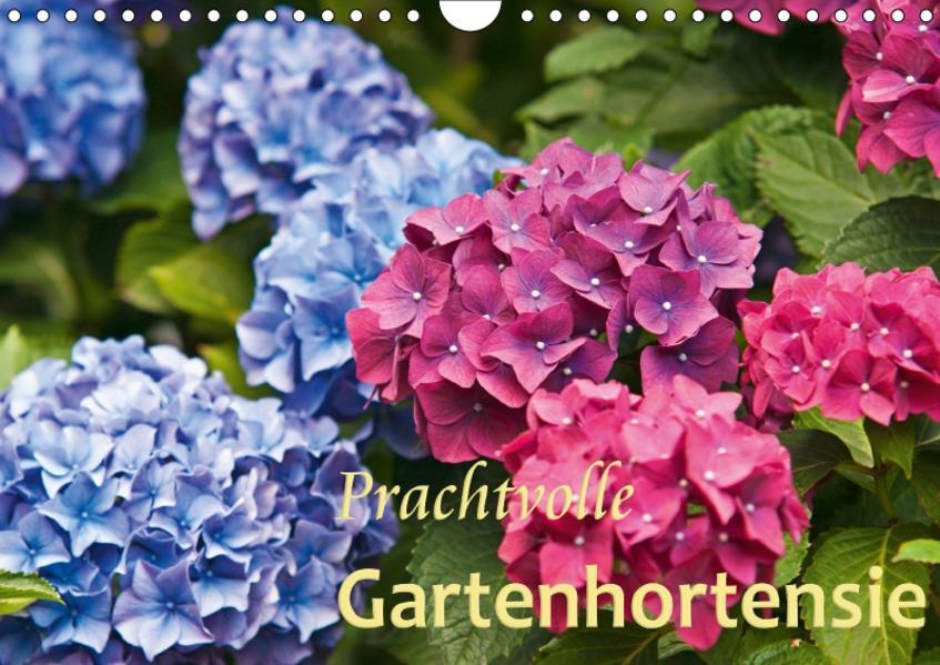 Prachtvolle Gartenhortensie (Wandkalender 2017 DIN A4 quer) - Coverbild
