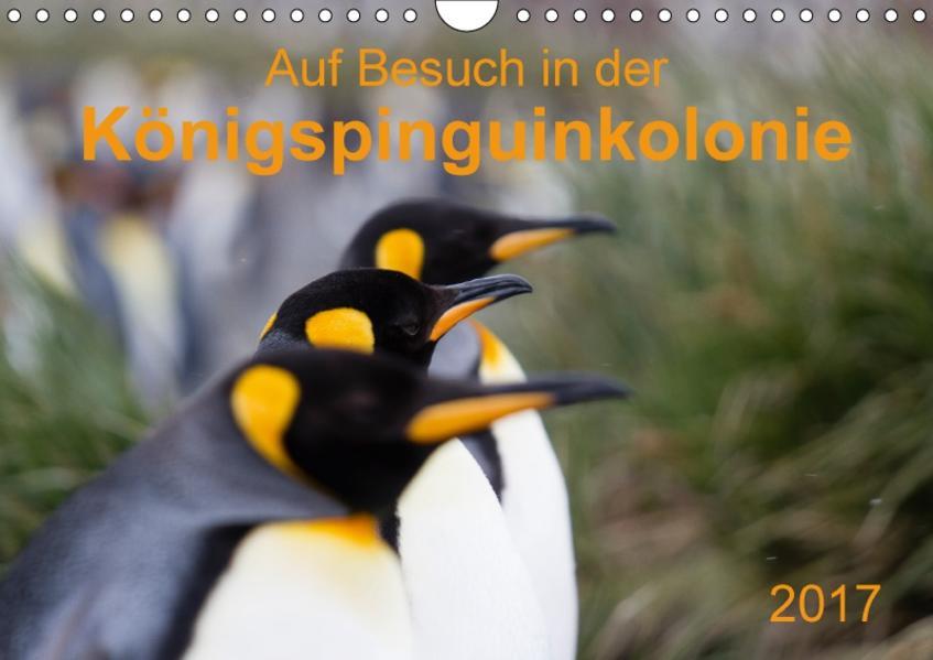 Auf Besuch in der  Königspinguinkolonie (Wandkalender 2017 DIN A4 quer) - Coverbild