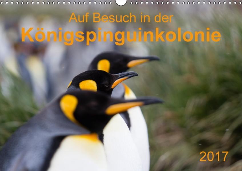 Auf Besuch in der  Königspinguinkolonie (Wandkalender 2017 DIN A3 quer) - Coverbild