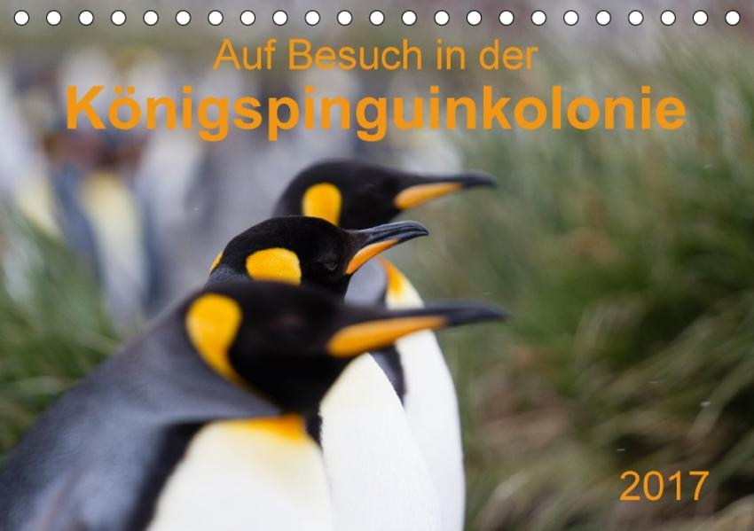 Auf Besuch in der  Königspinguinkolonie (Tischkalender 2017 DIN A5 quer) - Coverbild