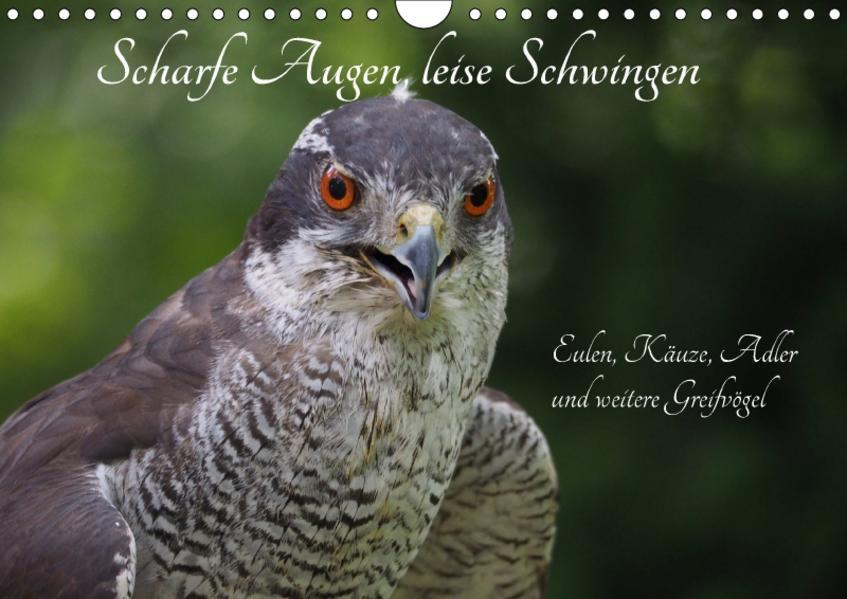 Scharfe Augen, leise Schwingen (Wandkalender 2017 DIN A4 quer) - Coverbild