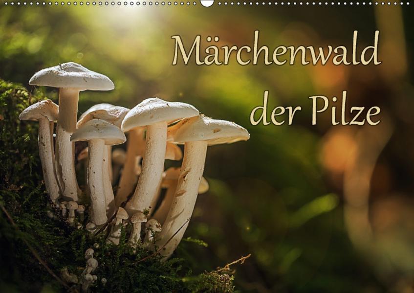 Märchenwald der Pilze (Wandkalender 2017 DIN A2 quer) - Coverbild