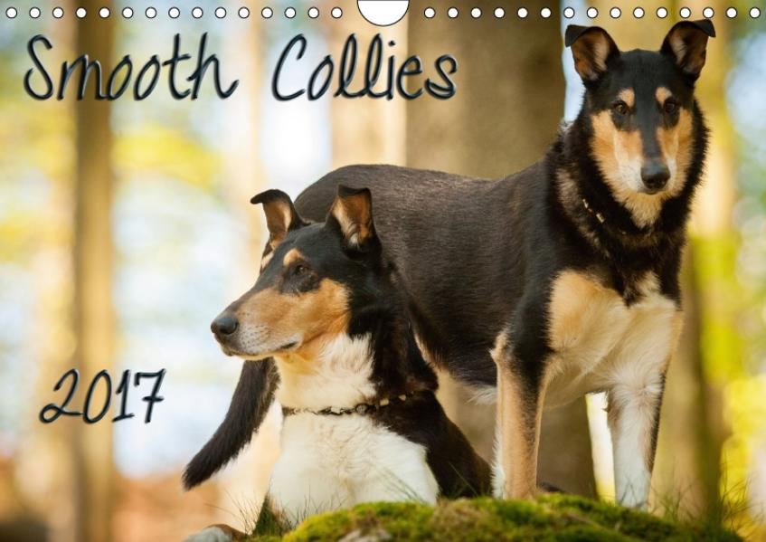 Smooth Collies (Wandkalender 2017 DIN A4 quer) - Coverbild