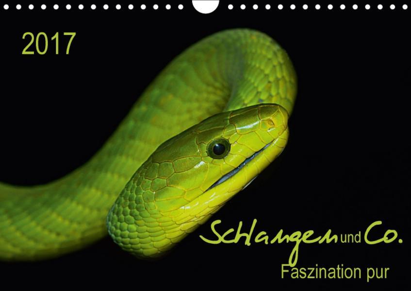Schlangen und Co. - Faszination pur (Wandkalender 2017 DIN A4 quer) - Coverbild