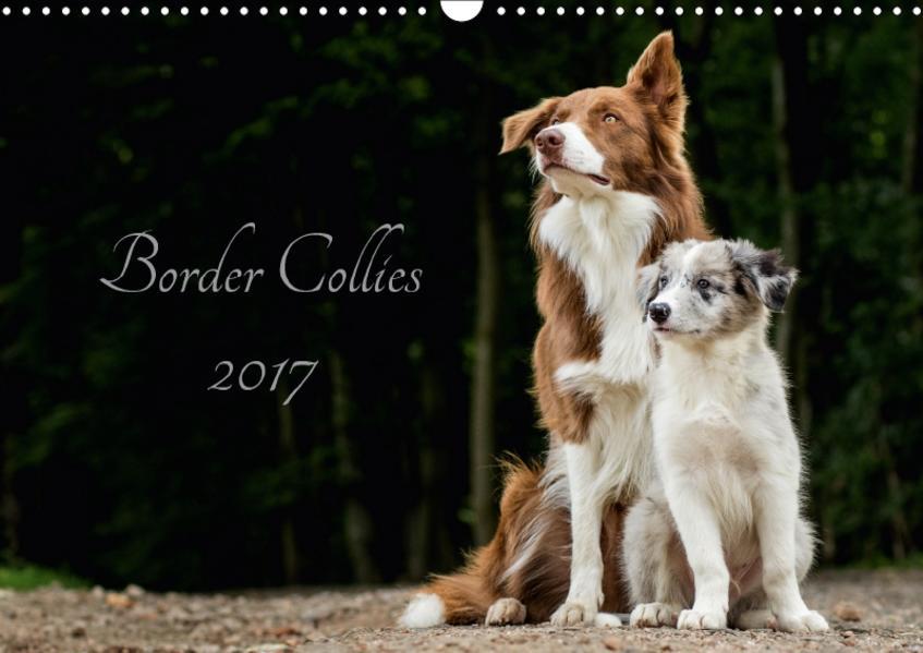 Border Collies 2017 (Wandkalender 2017 DIN A3 quer) - Coverbild