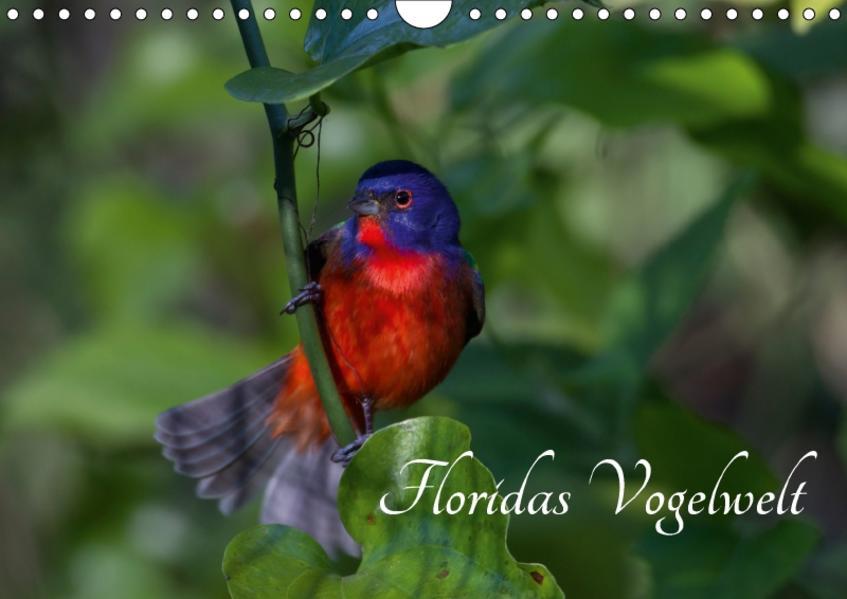 Floridas Vogelwelt (Wandkalender 2017 DIN A4 quer) - Coverbild