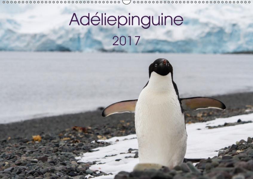 Adéliepinguine (Wandkalender 2017 DIN A2 quer) - Coverbild