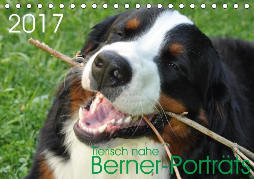 Tierisch nahe Berner-Porträts (Tischkalender 2017 DIN A5 quer) - Coverbild