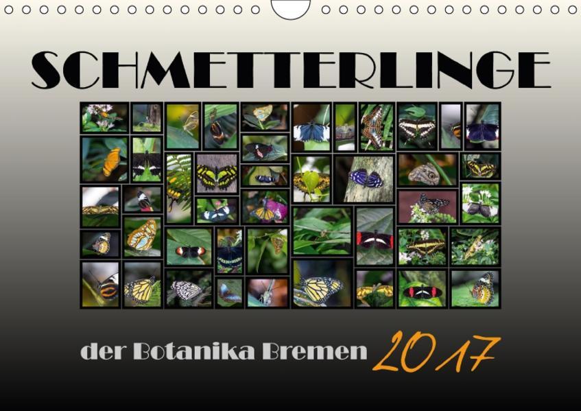 Schmetterlinge der Botanika Bremen (Wandkalender 2017 DIN A4 quer) - Coverbild