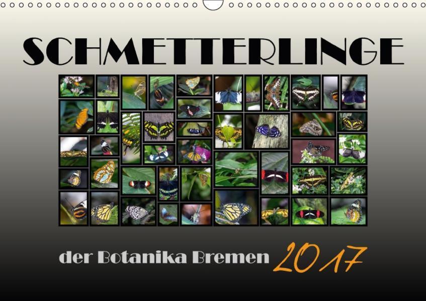 Schmetterlinge der Botanika Bremen (Wandkalender 2017 DIN A3 quer) - Coverbild