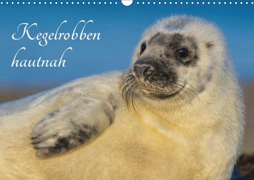 Kegelrobben hautnah (Wandkalender 2017 DIN A3 quer) - Coverbild