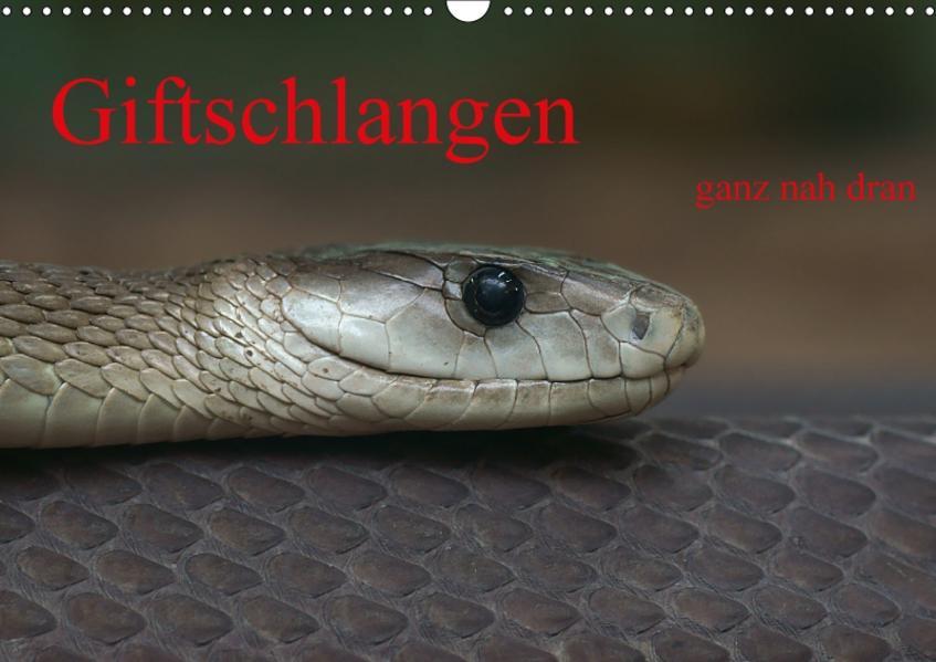 Giftschlangen, ganz nah dran (Wandkalender 2017 DIN A3 quer) - Coverbild