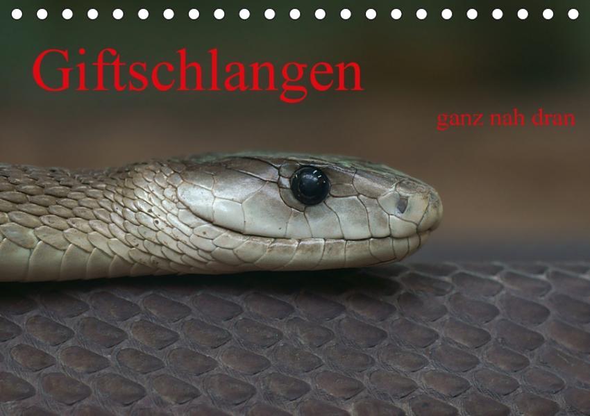 Giftschlangen, ganz nah dran (Tischkalender 2017 DIN A5 quer) - Coverbild