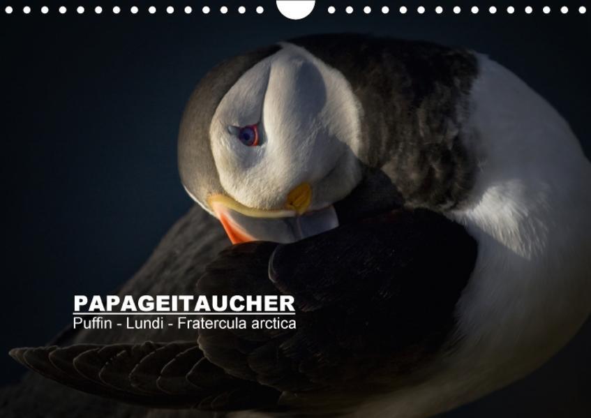 Papageitaucher: Puffin - Lundi - Fratercula arctica (Wandkalender 2017 DIN A4 quer) - Coverbild