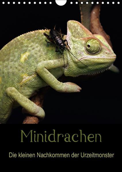 Minidrachen - Die kleinen Nachkommen der Urzeitmonster (Wandkalender 2017 DIN A4 hoch) - Coverbild