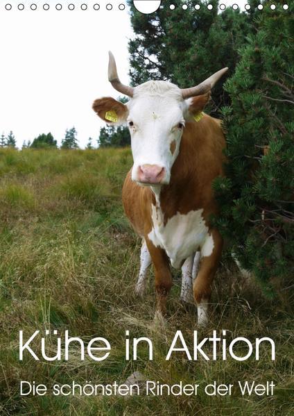 Kühe in Aktion. Die schönsten Rinder der Welt (Wandkalender 2017 DIN A4 hoch) - Coverbild