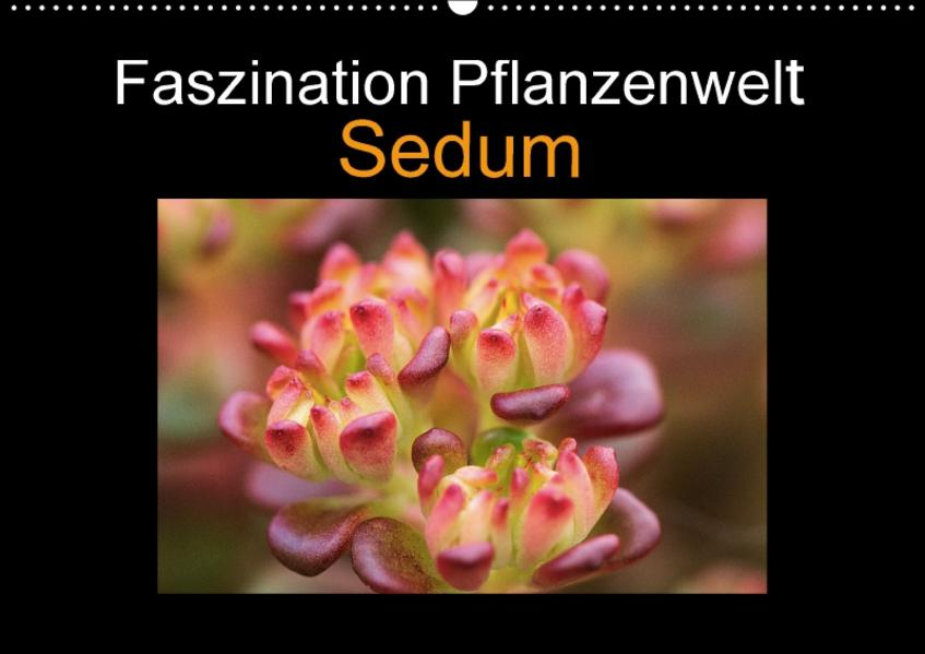 Faszination Pflanzenwelt - Sedum (Wandkalender 2017 DIN A2 quer) - Coverbild