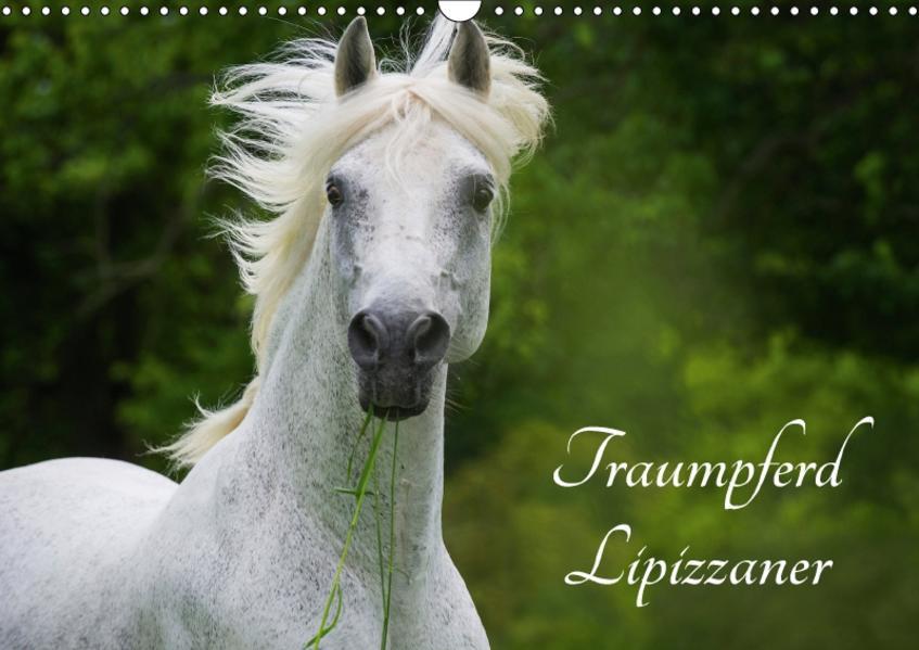 Traumpferd Lipizzaner (Wandkalender 2017 DIN A3 quer) - Coverbild